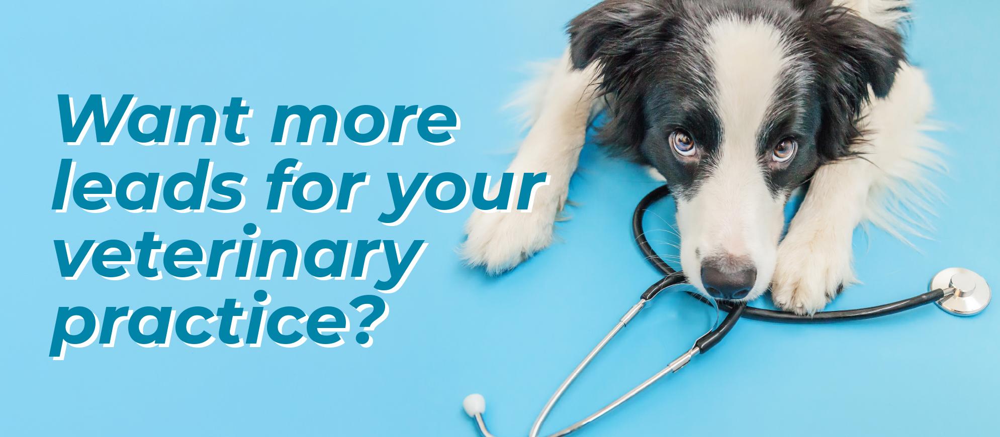 Digital marketing ideas for vets - eighty3creative